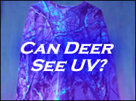 Can Deer See UV