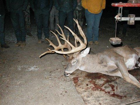 22 Point Junction Tx Buck Texas Hunting Texas