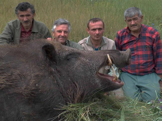 Monter Hog