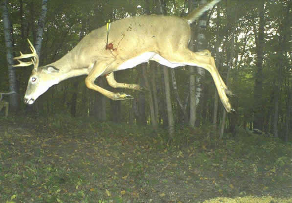 Best Trail Cam Pic Yet