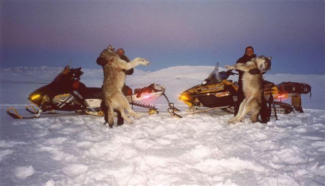 Wyoming Wolfs