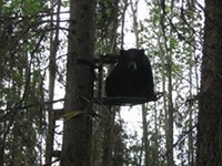 Bear In Tree Stand