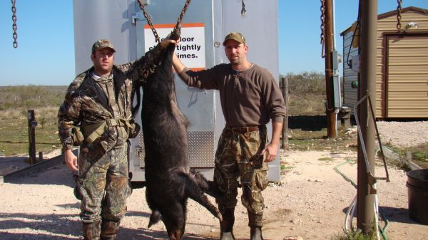 Mew Ranch - South Texas Hunting Service