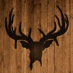 Buck Trader