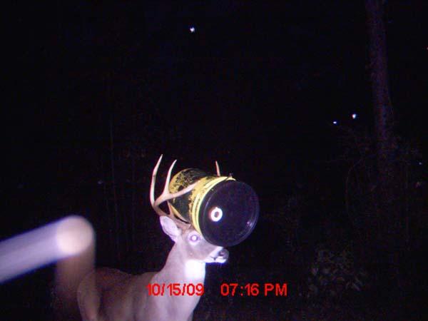 Bucket Head Buck