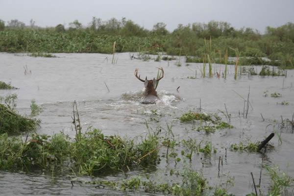 Hurricane Gustave Stirs Up Wild Game