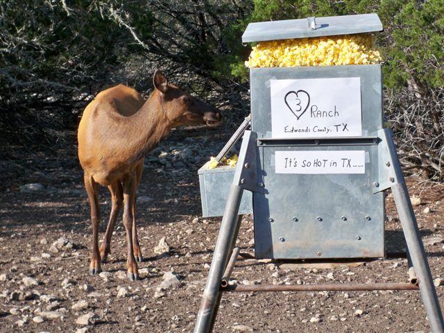Its Hot In Texas - Deer Popcorn