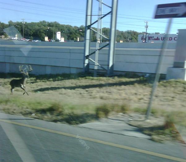 San Antonio Buck I-10/Callaghan